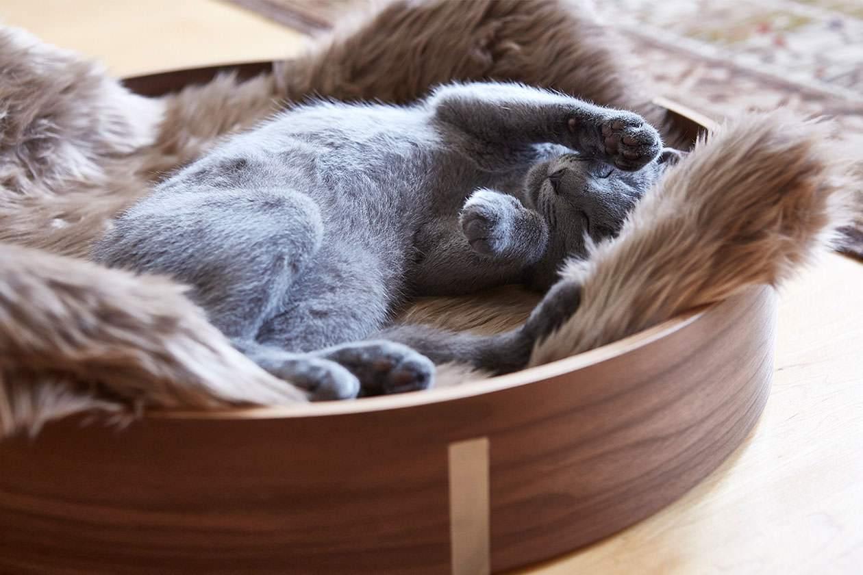 Best Cat Beds Under £50