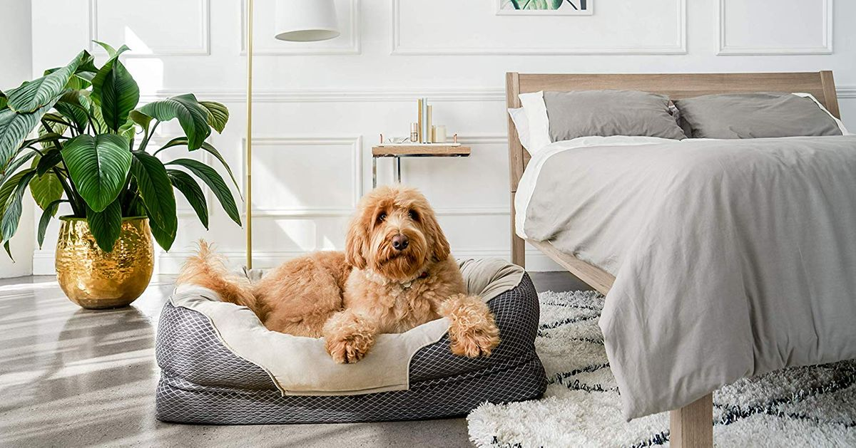 Best Dog Beds Under £50