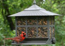 Best Rustic Bird Feeders