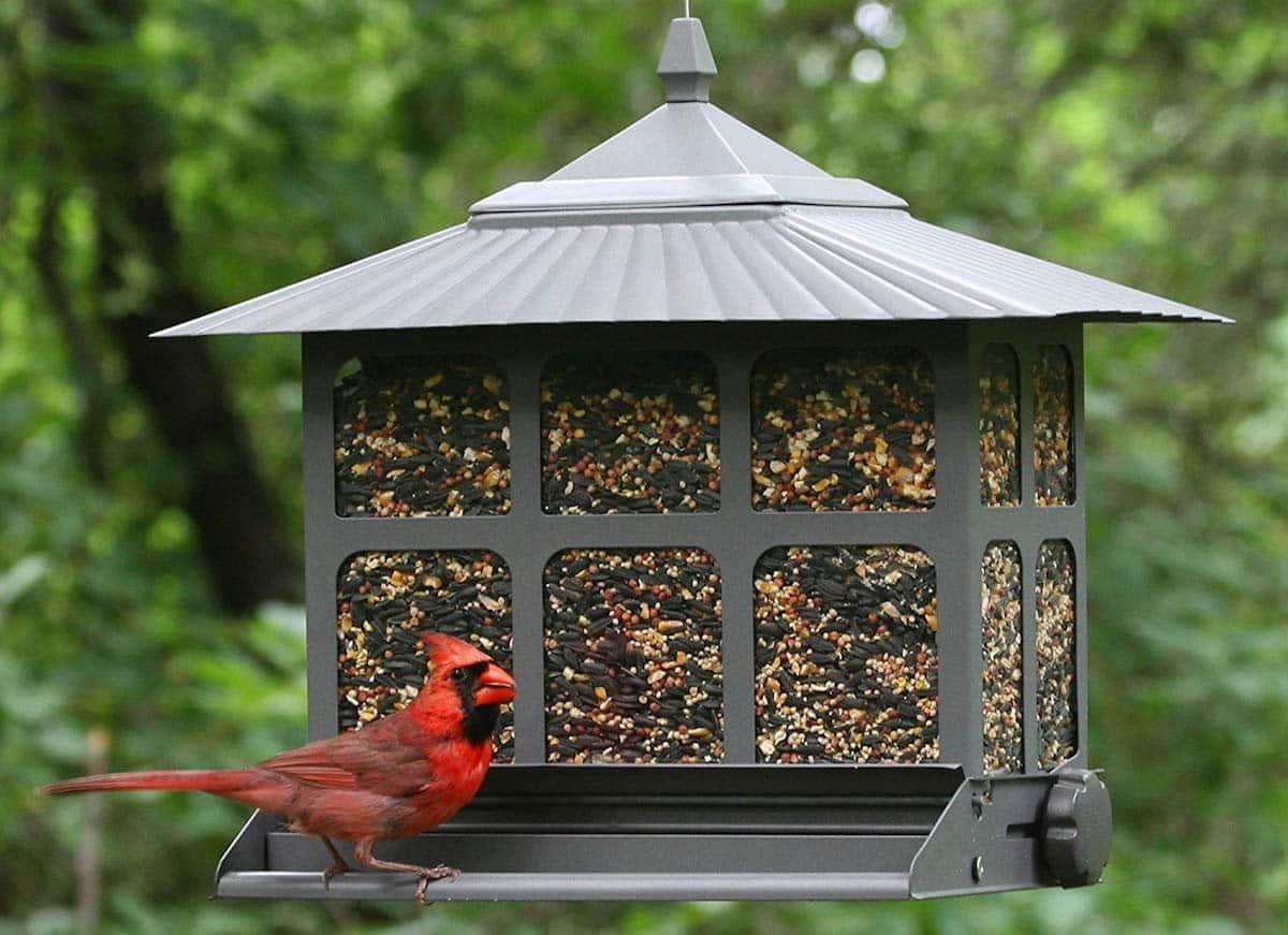 Best Rustic Bird Feeders 2020